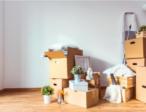 Moving houseplants: get useful info